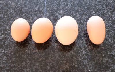 Hvordan går det med hønseintegrationen?